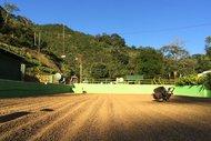 Thumbail for Costa Rica Santa Elena Honey - #0