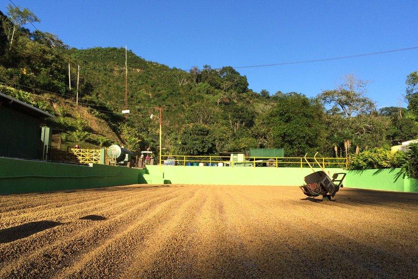 Costa Rica Santa Elena Honey by Caffe Vita - image 0
