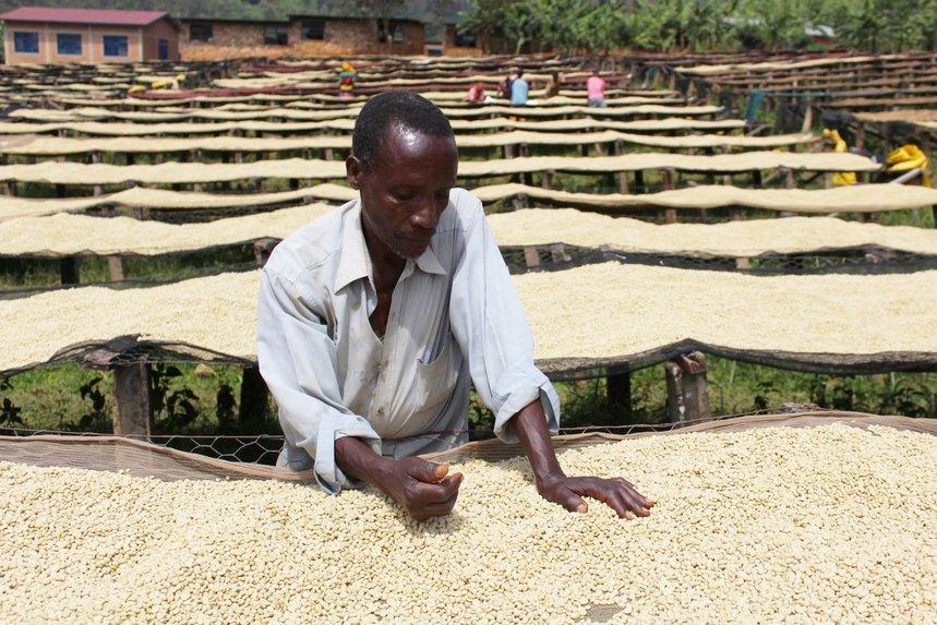 Burundi Yandaro by Camber Coffee - image 0