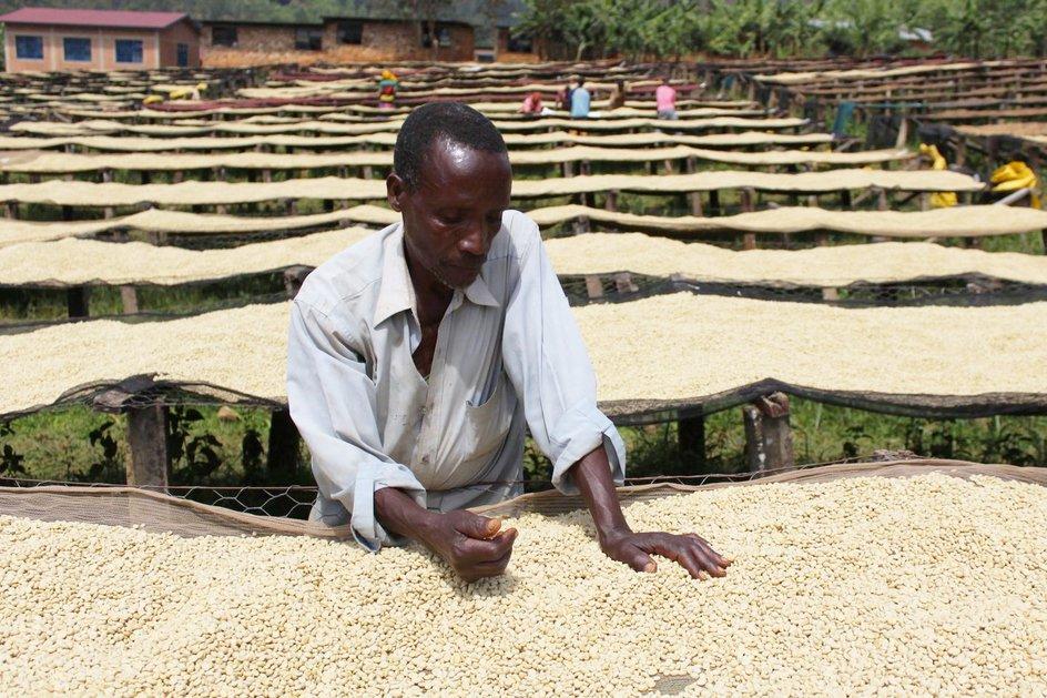 Burundi Yandaro by Camber Coffee