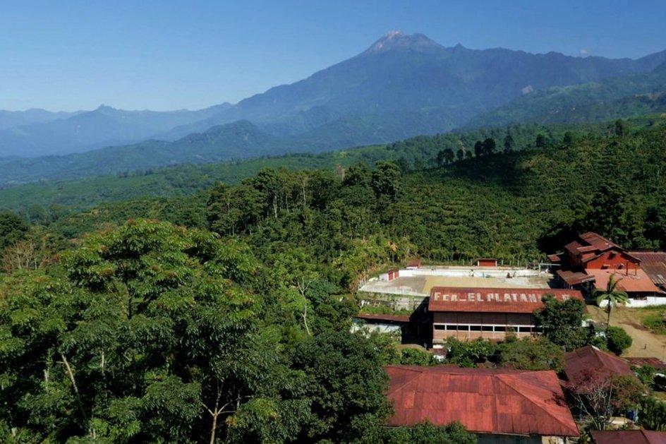 Guatemala Geisha El Estadio by Herkimer Coffee - image 0