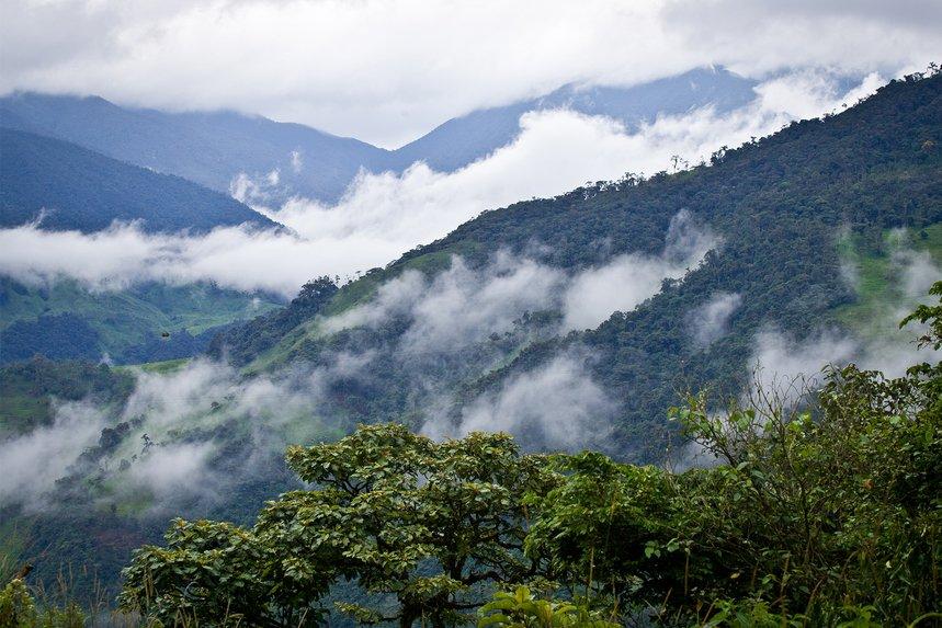 Ecuador Penaherrera by Blossom Coffee Roasters - image 0