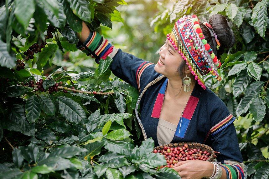 Thailand Huai Nam Khun by Seven Coffee Roasters - image 0