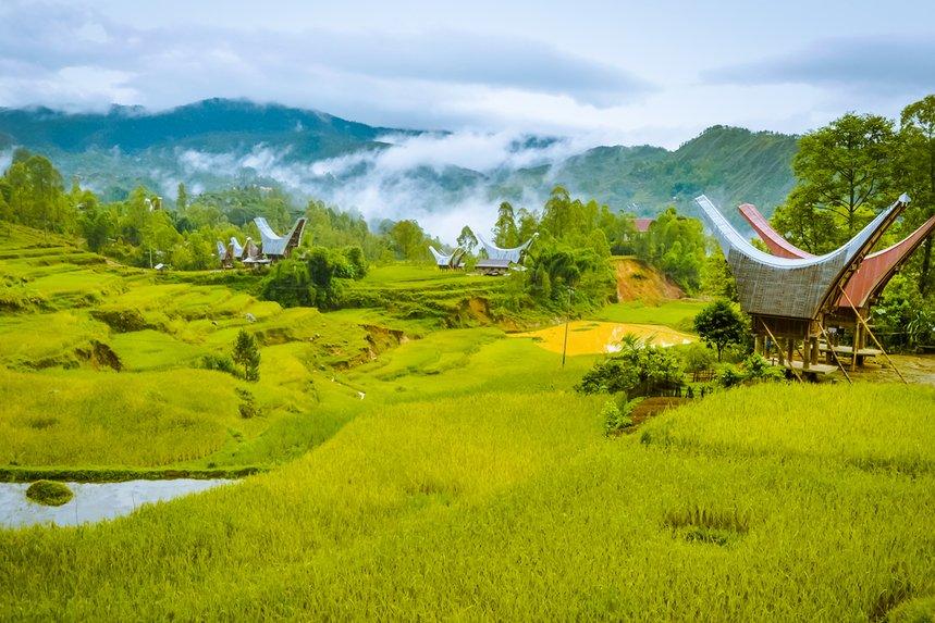Sulawesi Toraja by Fundamental Coffee Company - image 0